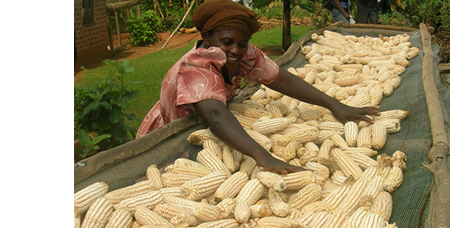 Barriers to Private Sector Arbitrage in Kenyan Maize Markets