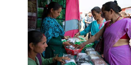 Transitioning into the Formal - Women Entrepreneurs in the Informal Economy of Nepal
